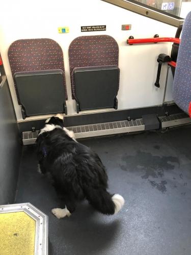 Detectie in een bus