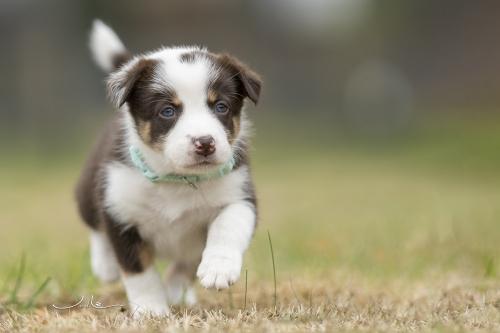 Pups Mirjam 20200927 - mint