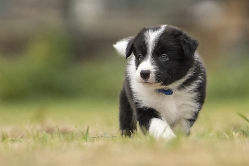 Pups Mirjam 20200927 - blauw