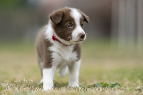 Pups Mirjam 20200927 - rood