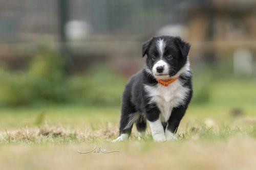 Pups Mirjam 20200927 - oranje