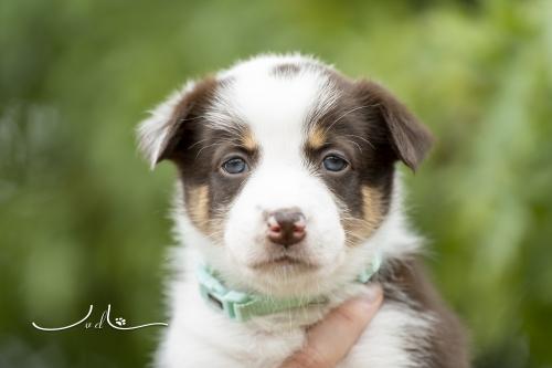 Pups Mirjam 20200927