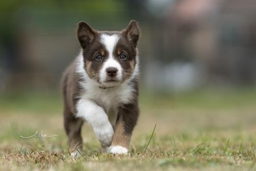 Pups Mirjam 20200927- beige