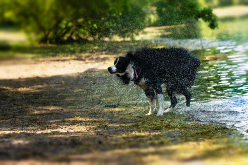 Mijssje vindt water zalig.